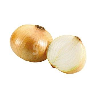 Cebolla blanca Ud 290 g (peso aproximado)