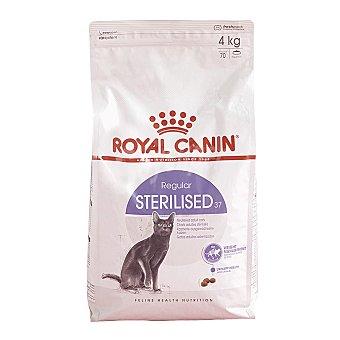 Royal Canin Pienso para gatos adultos Sterelised 37 4 kg