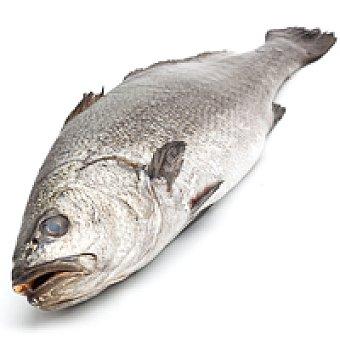 Enatur Corvina 1.5 kg