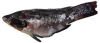 VARIOS Maragota (pinto) fresca entera (preparado: destripada, SIN cabeza) granel 300 g peso aprox.