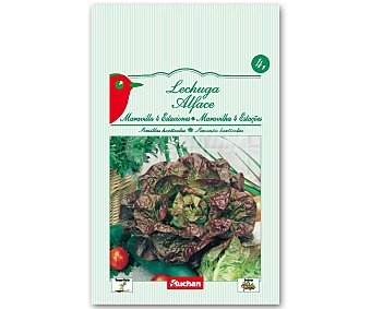 AUCHAN Semillas para sembrar Lechuga Maravilla de la variedad Cuatro Estaciones 4 Gramos