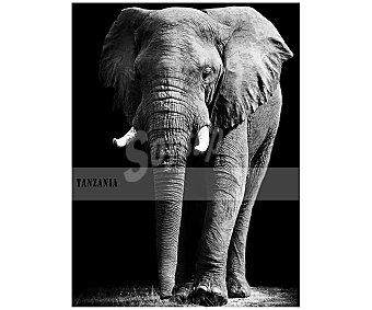 IMAGINE Cuadro con la imagen de un elefante sobre fondo negro con la palabra Tanzania a la izquierda y dimensiones de 60x80 centímetros 1 unidad