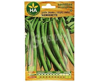 HA-Huerto y Jardín Semillas ecológicas para sembrar judias de la variedad enana 14 gramos