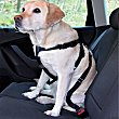 Arnés cinturón de coche para perros talla L diámetro pecho 70-90 cm envase 1  Bricar