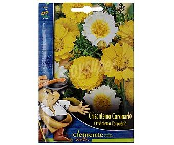 Auchan Semillas para plantar Crisantemo de la variedad Coronario 2 Gramos