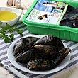 Mejillón vivo ecólógico Bandeja de 1kg Angulas Aguinaga