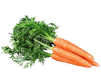 Zanahoria hortaliza Manojo 1 unidad