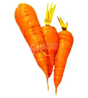 Zanahoria Bolsa de 1000.0 g.
