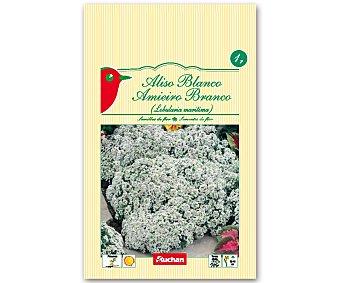 AUCHAN Semillas para plantar Aliso de color blanco 1 Gramos