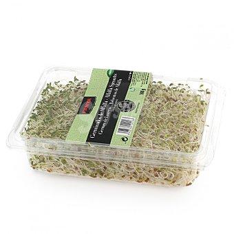 Fanya Brotes de alfalfa Bandeja 100 g