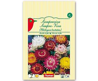 AUCHAN Semillas para plantar Siempreviva de diferentes colores 1 Gramo