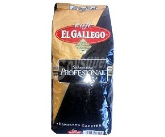 El Gallego Café en grano, cafeterías 1 Kilogramo