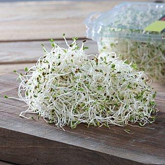 Brotes de alfalfa Bandeja de 100 g