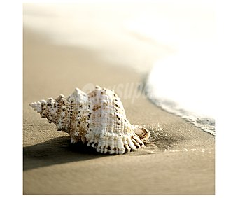 IMAGINE Lámina con la imagen de una bonita concha bañada por el mar y dimensiones de 28x28 centímetros 1 unidad
