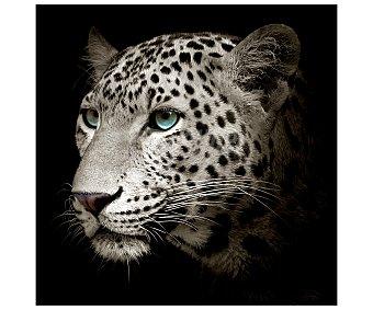IMAGINE Lámina con la imagen de la cabeza de un bonito felino y dimensiones de 28x28 centímetros 1 unidad