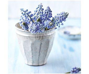 IMAGINE Cuadro con la imagen de una maceta con flores azules en su interior y dimensiones de 28x28 centímetros 1 unidad.