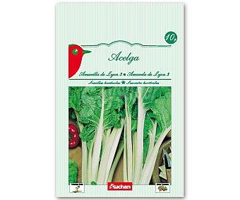 Auchan Semillas para sembrar acelgas de la variedad Amarilla de Lyon 10 Gramos