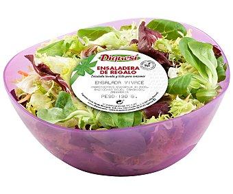DIQUESÍ Ensalada de escarola rizada, radicchio rojo, canónigo y zanahoria DIQUESÍ,190 gramos en ensaladera 190g