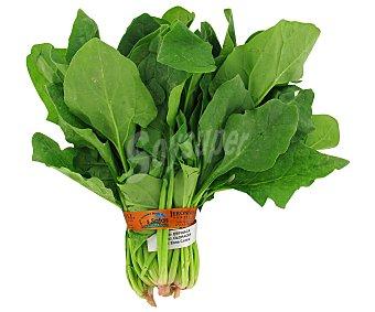 HORTALIZA Espinacas, manojo de 300 gramos aproximadamente 300g