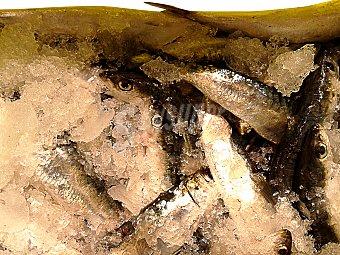 VARIOS Sardina fresca mediana (preparado: sin limpiar) granel 250 g peso aprox.