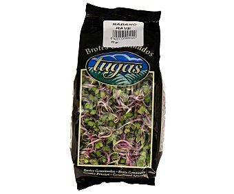 Tugas Brotes germinados de rábanos 80 g