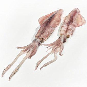 NI Calamar sahariano entero sin engordar elaborar peso aproximado pieza 400-700 g