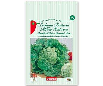 Auchan Semillas para sembrar lechugas batavia de la variedad Amarilla de Paris 4 Gramos