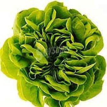 Salanova Lechuga Mantecosa verde unidad