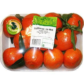 Clementinas en rama bandeja 1,3 peso aproximado bandeja 1,3 kg