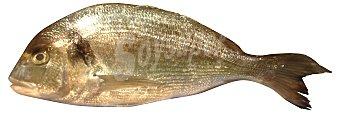 VARIOS Dorada Fresca de Costa (entera destripada, sin cabeza) granel A granel 400 g peso aprox.